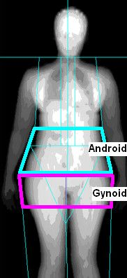 Android and Gynoid 2
